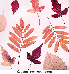 Natural composition of dry pink leaves and pears on pink background. Autumn harvest concept.