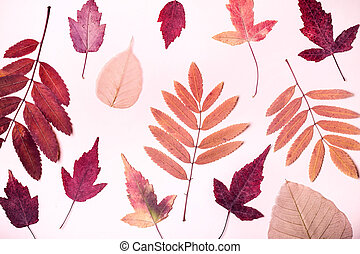 Natural composition of dry pink leaves on pink background. Autumn harvest concept.