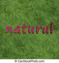 natural create by red color flowers with grass