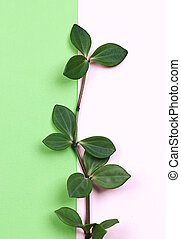 natural creative concept. Green plant branch with leaves on trending pink green background