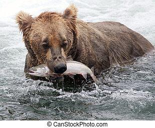 natural de alaska, marrón, salmón, oso
