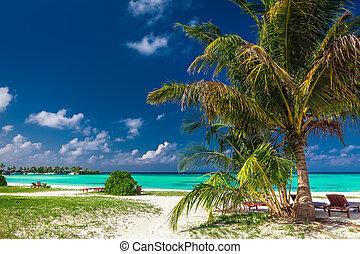 natural, deitar-patrocine, praia tropical, com, vibrante, lagoa, em, maldives