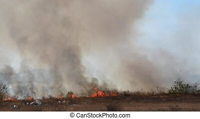 Natural disaster of uncontrolled burning. Burning dry grass and reeds in a field in an urban suburb. Tongues of flame and smoke on a sunny day.