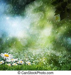 natural, dulce, debajo, fondos, lluvia, margarita, flores