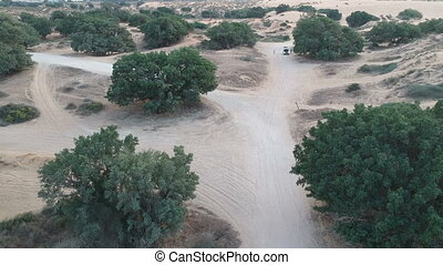 Natural dunes with trees shot from drone shot clip