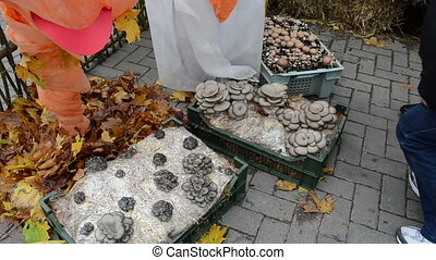 natural ecologic mushroom - ecological natural edible...