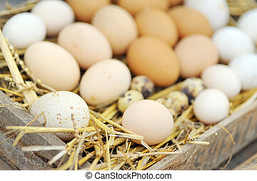 Natural eggs in nest close up