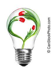natural, energia, concept., bulbo leve, com, tulips, com, forma, de, coração, isolado, branco