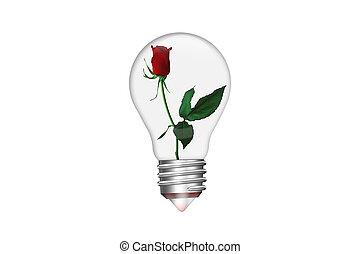 natural, energia, concept., bulbo leve, forma, de, coração, com, rosa vermelha, dentro, isolado, branco