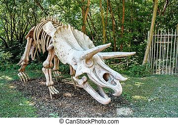 natural, esqueleto, encima, triceratops, plano de fondo, ...