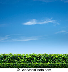 Natural fence and blue sky