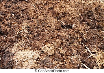 Natural fertilizer from cow dung
