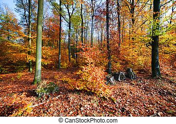 natural, floresta, em, outono, outono