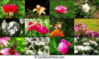 Natural flower collage