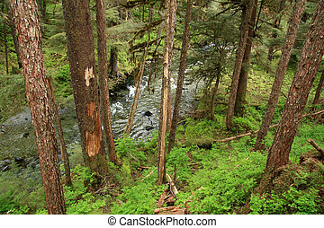 Forest near the city of Juneau in Alaska, USA