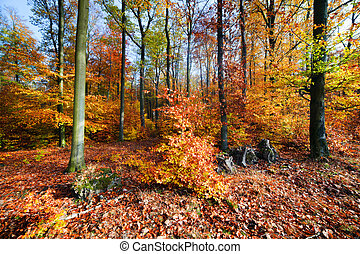 Natural forest in autumn, fall
