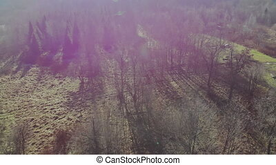 Natural pure deciduous forest in the Carpathians in early spring deciduous forest in a leafless state