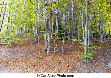 natural forest Montseny