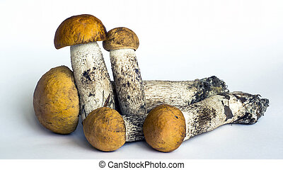 Natural forest mushrooms