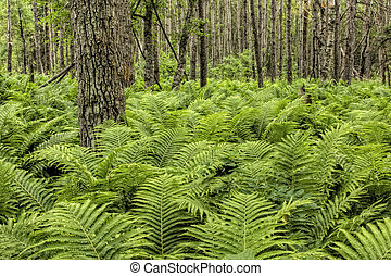 Natural Forest with Fern Plants - A lush, dreamlike,...