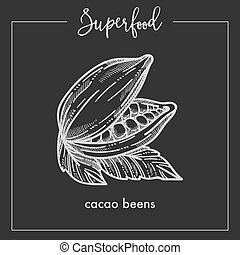 Natural fragrant cocoa beans with leaves monochrome superfood sepia sketch.