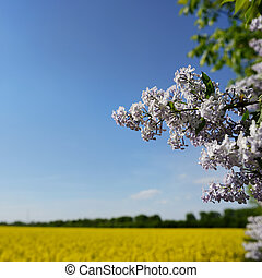 natural frame, blue sky and green tree, summertime picture