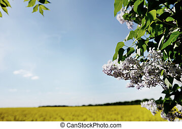 natural frame, blue sky yellow field and green tree, ...