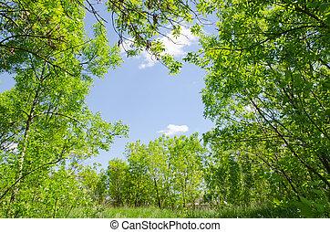 natural frame in wood