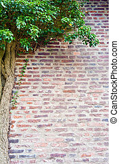 Natural frame of ivy growing on the old brick wall