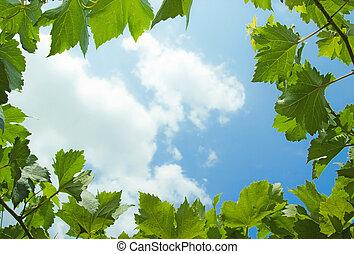 natural frame - photosynthesis