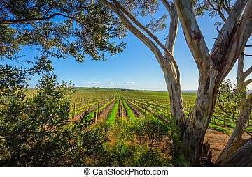 Natural Frame - Vineyard in the Adelaide Hills, South ...