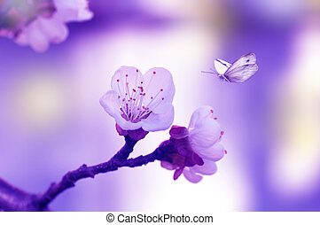 natural fresh cherry flowers, butterfly flies on a flower, blooming cherry tree, coloring applied, spring background