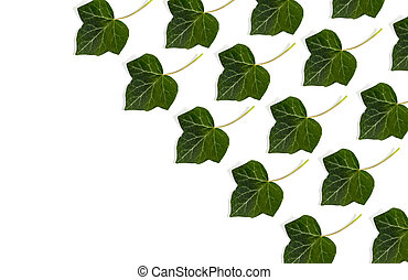 natural fresh green leaves isolated on white background and space for text entry, product placement.