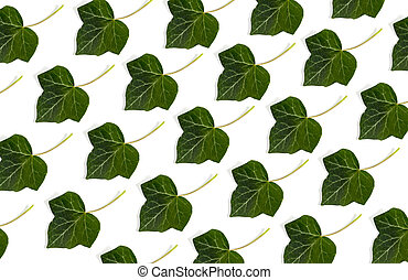 natural fresh green leaves isolated on white background