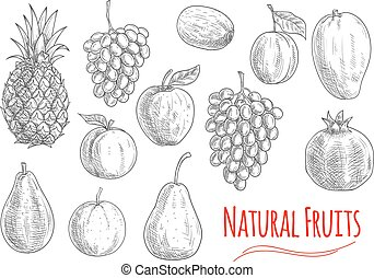 Natural fruits sketches for vegetarian food design