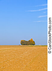 natural full frame background with wtree and field after...