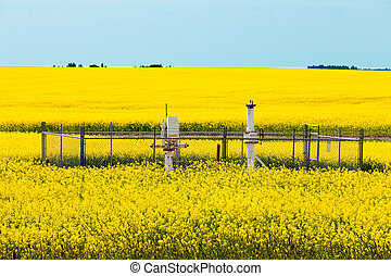 Natural gas wellheads in yellow blooming canola rapeseed field agricultural farmland in Alberta, Canada