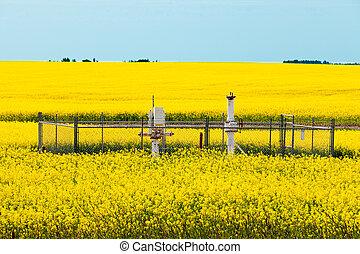 Natural gas wellheads canola agricultural farmland