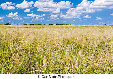 Natural Grasslands - A natural grass pasture or meadow on a...