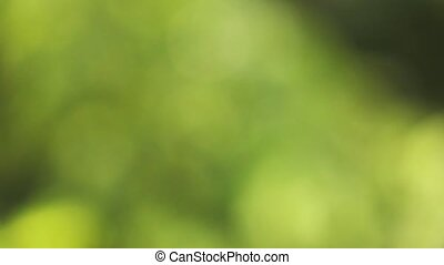 natural green background bokeh Slow motion. 1080p full HD...