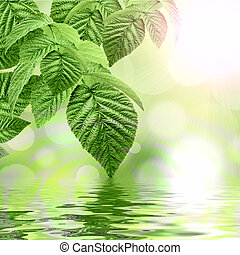 Natural green background reflecting in water