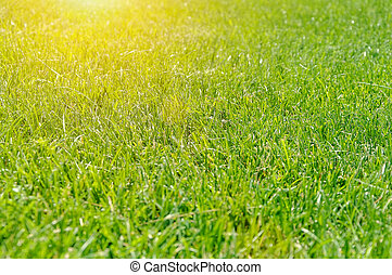 Natural green background with selective focus