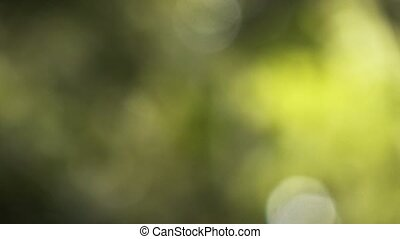 natural green blurred background, Nature abstract...