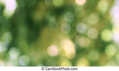 Natural green bokeh - Green leaves natural bokeh background