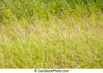 Natural green bright blur background