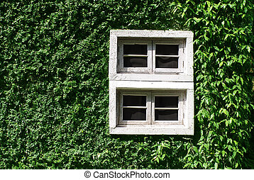 green climbing tree, plant wall with white window