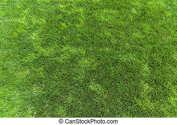 Natural green grass background texture