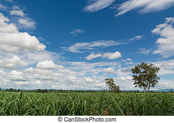 Natural Green Grass Field with Blue Sky and White Cloud