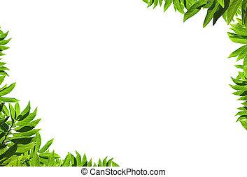 Natural green leaf frame on white background