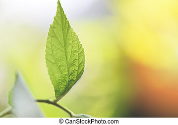 Natural green leaf on blurred sunlight background in garden ecology fresh leaves tree beautiful plant in the nature forest